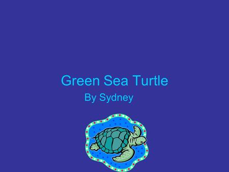 Green Sea Turtle By Sydney. Where does the Green Sea Turtle live? They live in warm oceans near Florida.