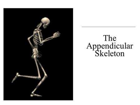 C h a p t e r 8 The Appendicular Skeleton. An Introduction to the Appendicular Skeleton  The Appendicular Skeleton  126 bones  Allows us to move and.