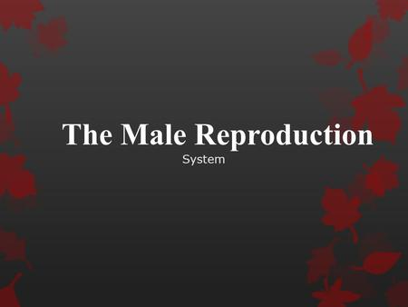 The Male Reproduction System. Internal and External Organs  Internal  Glands & Ducts-storage  Nourish  Transport sperm  External  Produce  Store.