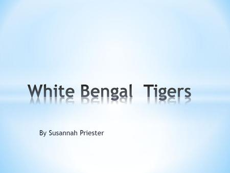 By Susannah Priester. Hello, in this book you will find out all about me, a White Bengal Tiger. I live in the rain forest I will not tell you too much.