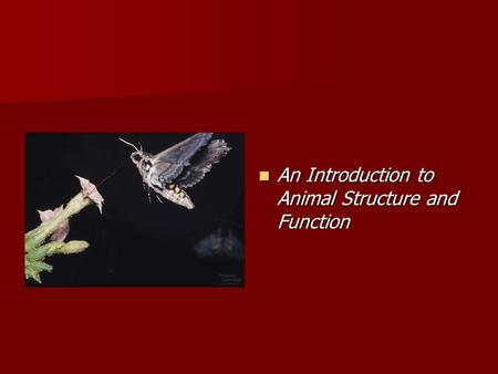 An Introduction to Animal Structure and Function An Introduction to Animal Structure and Function.