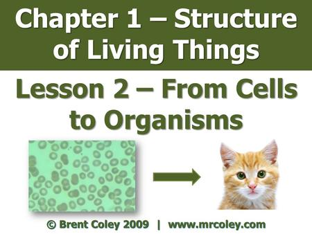 Chapter 1 – Structure of Living Things Lesson 2 – From Cells to Organisms © Brent Coley 2009 | www.mrcoley.com.
