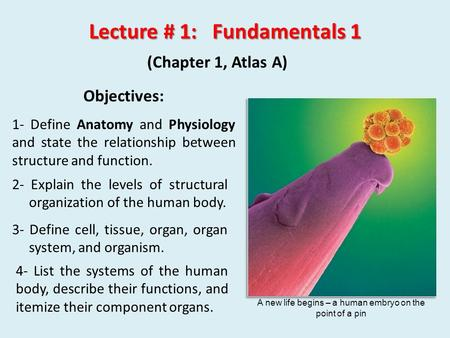4- List the systems of the human body, describe their functions, <strong>and</strong> itemize their component organs. Lecture # 1: Fundamentals 1 (Chapter 1, Atlas A) Objectives: