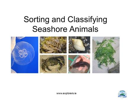 Sorting and Classifying Seashore Animals www.explorers.ie.
