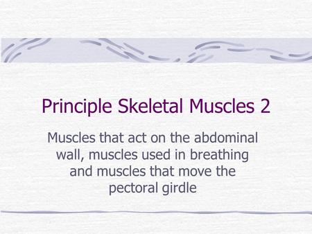 Principle Skeletal Muscles 2 Muscles that act on the abdominal wall, muscles used in breathing and muscles that move the pectoral girdle.