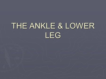 Lower Leg Knee cap Femur Medial condyle of femur