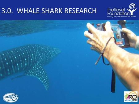 3.0. WHALE SHARK RESEARCH © MWSRP. 3.1 WHALE SHARK RESEARCH Outline and Introduction Key Whale Shark Questions Common Research Techniques Other research.