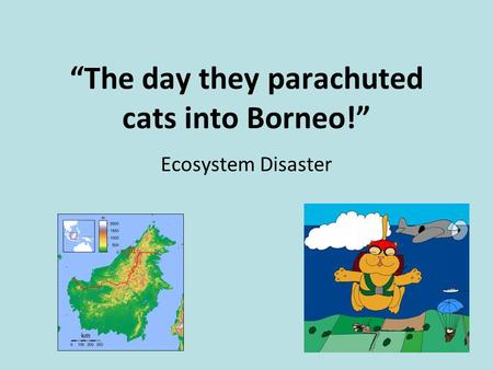 The Day They Parachuted Cats On Borneo Video