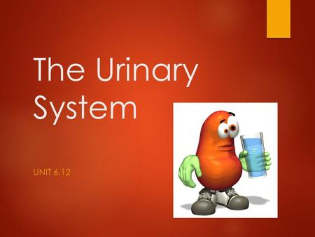 The Urinary System UNIT 6.12. Objectives:  Define, pronounce, and spell all key terms.  Label a diagram of the Urinary System.  State the functions.