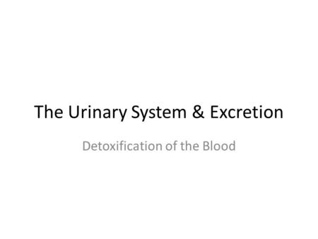 The Urinary System & Excretion Detoxification of the Blood.