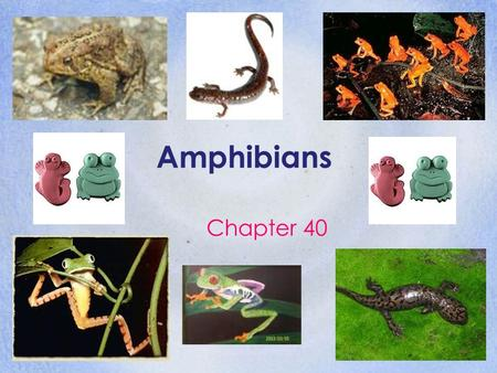 Amphibians Chapter 40. Origins & Evolution of Amphibians Section 40.1.