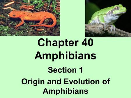 Chapter 40 Amphibians Section 1 Origin and Evolution of Amphibians.