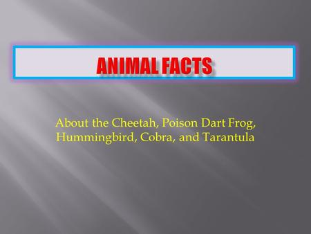 About the Cheetah, Poison Dart Frog, Hummingbird, Cobra, and Tarantula.