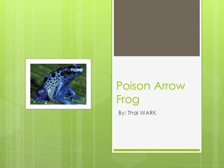 Poison Arrow Frog By: Thai WARK. Baby Name Poison Arrow Frog  This frog is a tadpole when young and a froglet when older.