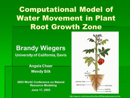 Computational Model of Water Movement in Plant Root Growth Zone Brandy Wiegers University of California, Davis Angela Cheer Wendy Silk 2005 World Conference.