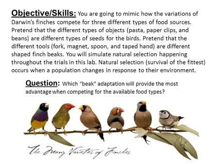 "Question: Which ""beak"" adaptation will provide the most advantage when competing for the available food types? Objective/Skills : You are going to mimic."