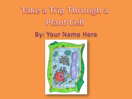 Take a Trip Through a Plant Cell