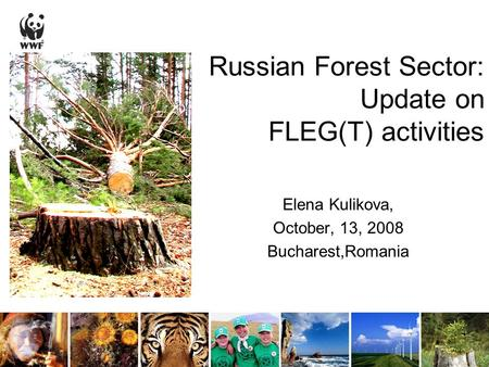 Russian Forest Sector: Update on FLEG(T) activities Elena Kulikova, October, 13, 2008 Bucharest,Romania.