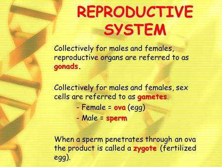 REPRODUCTIVE SYSTEM gonads. Collectively for males and females, reproductive organs are referred to as gonads. gametes. Collectively for males and females,