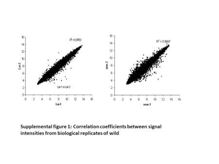 Supplemental figure 1: Correlation coefficients between signal intensities from biological replicates of wild.