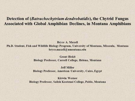 Detection of (Batrachochytrium dendrobatidis), the Chytrid Fungus Associated with Global Amphibian Declines, in Montana Amphibians Bryce A. Maxell Ph.D.