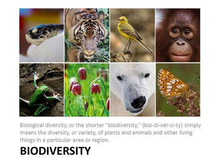 BIODIVERSITY Biological diversity, or the shorter biodiversity, (bio-di-ver-si-ty) simply means the diversity, or variety, of plants and animals and.