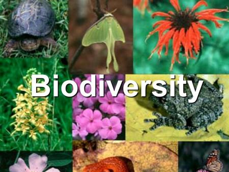 Biodiversity. Which do you like better? A B A B.