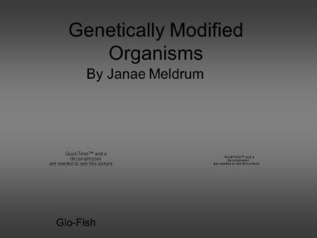Genetically Modified Organisms By Janae Meldrum Glo-Fish.