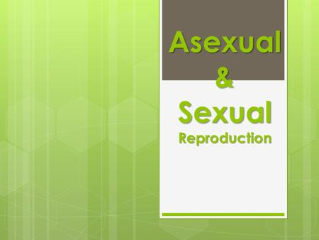 Asexual & Sexual Reproduction. Asexual Reproduction  Type of reproduction in which a new organism is produced from ONE parent and the offspring is identical.