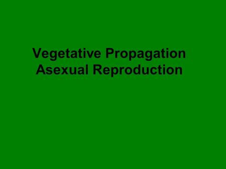 Vegetative Propagation Asexual Reproduction. Stem cutting Examples: Pothos, Purple Leaf Plant Philodendron Wandering Jews.
