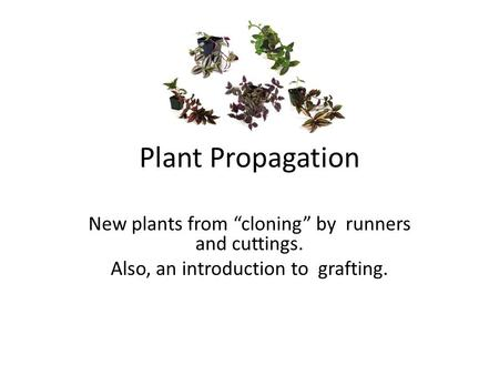 "Plant Propagation New plants from ""cloning"" by runners and cuttings. Also, an introduction to grafting."