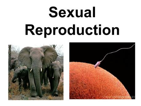 Sexual Reproduction. My Goals Today I will learn how living organisms reproduce and pass traits to their offspring.