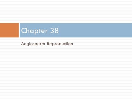 Chapter 38 Angiosperm Reproduction.