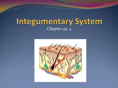 Chapter 45. 4. Integumentary System Hair Skin Nails.