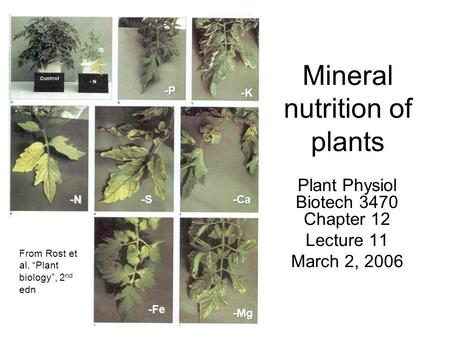 "Mineral nutrition of plants Plant Physiol Biotech 3470 Chapter 12 Lecture 11 March 2, 2006 From Rost et al. ""Plant biology"", 2 nd edn -P -K -N -S -Ca -Fe."