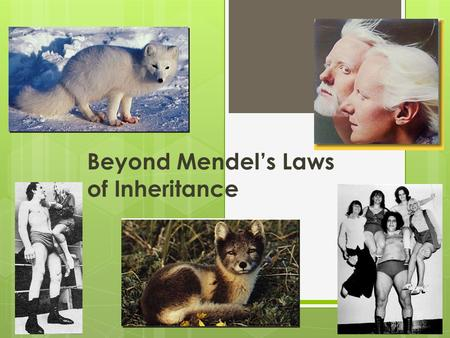 Beyond Mendel's Laws of Inheritance Extending Mendelian genetics  Mendel worked with a simple system  peas are ____________________________ simple.