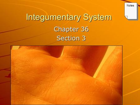 Integumentary System Chapter 36 Section 3 Notes. Keys Lecture Outline – Integumentary System PowerPoint Notes textbook questions.