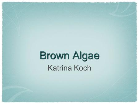 Brown Algae Katrina Koch. What Are They? Largest and most complex algae, called seaweeds Multicellular and form with branched filaments, tufts, fleshy.