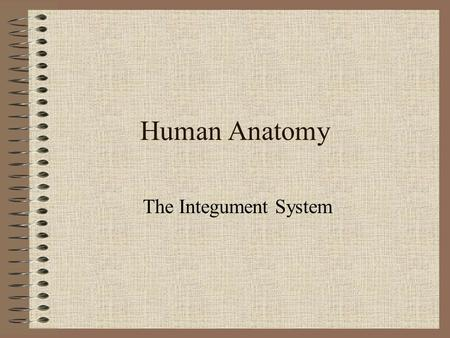 Human Anatomy The Integument System. Function(s) 1.Physical protection 2.Thermoregulation 3.Excretion 4.Synthesis of vitamin D 3.