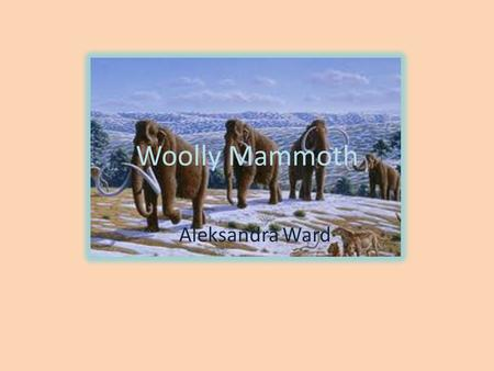 Woolly Mammoth Aleksandra Ward. Habitat The Woolly Mammoth lived in North America and Eurasia.