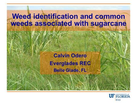 Weed identification and common weeds associated with sugarcane Calvin Odero Everglades REC Belle Glade, FL.