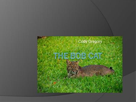 Cody Gregory. Taxonomy of the Bobcat  Kingdom: Animalia  Phylum: Chordata  Class: Mammilia  Order: Carnivora  Family: Felidae  Genus: Lynx  Species: