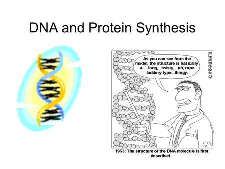 DNA and Protein Synthesis. Nucleic Acids Nucleic Acids - Function Control the processes of heredity by which cells and organisms make proteins.