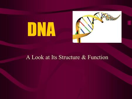 "DNA A Look at Its Structure & Function. DNA Is often called a ""double helix"" –Twisted ladder."