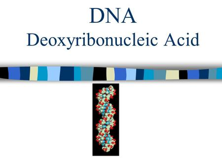 DNA Deoxyribonucleic Acid. DNA Structure What is DNA? The information that determines an organism's traits. Stores and passes on genetic information.