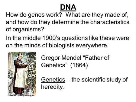 DNA How do genes work? What are they made of, and how do they determine the characteristics of organisms? In the middle 1900's questions like these were.