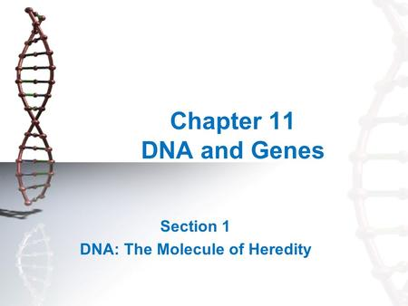 Chapter 11 DNA and Genes Section 1 DNA: The Molecule of Heredity.