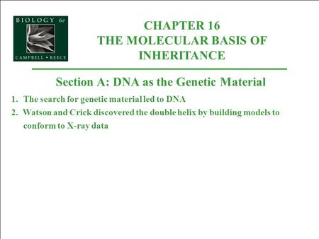 CHAPTER 16 THE MOLECULAR BASIS OF INHERITANCE