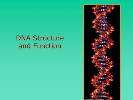 DNA Structure and Function. Griffith Griffith showed some heredity material could move into live harmless bacteria and make a lethal strain.