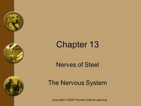 Copyright © 2006 Thomson Delmar Learning Chapter 13 Nerves of Steel The Nervous System.